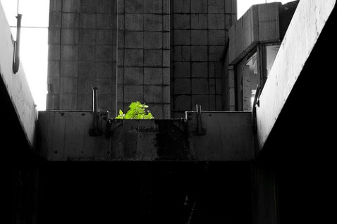 Green Growth in the City
